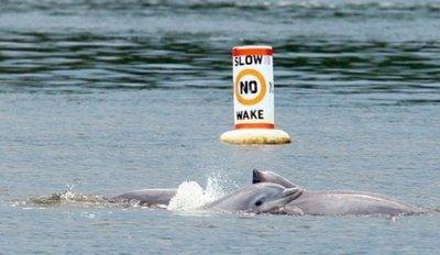 d74b5-dolphin-bmp