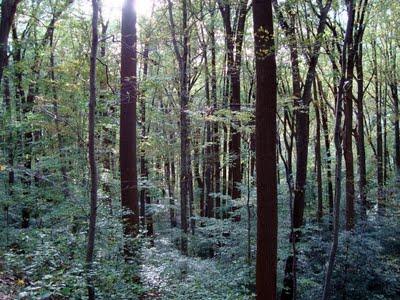 woods+3